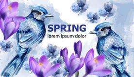 Vecteur d'aquarelle de carte de ressort avec les oiseaux et les fleurs mignons Petits oiseaux bleus Belles fleurs roses de magnol images libres de droits