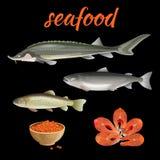 Vecteur d'ensemble de fruits de mer illustration de vecteur