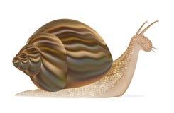 Vecteur d'escargot illustration de vecteur