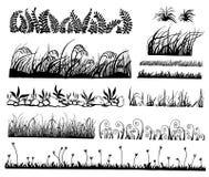 Vecteur d'herbe, Photo stock