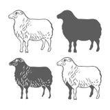 Vecteur d'éléments de conception de moutons d'animal domestique Photo libre de droits