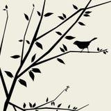 vecteur de brunchs d'oiseau beau Photos libres de droits