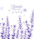 Vecteur de carte d'aquarelle de lavande décor de floraison floral sensible Cérémonie l'épousant, carte postale, salutation de jou illustration stock