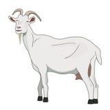 Vecteur de chèvre Photo stock