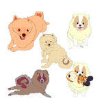 Vecteur de chien Image stock