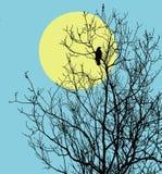 vecteur de corbeaux d'illustration Photos libres de droits