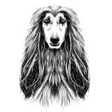 Vecteur de croquis de lévrier afghan de race de plein-visage de tête de chien Images stock