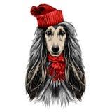 Vecteur de croquis de lévrier afghan de race de plein-visage de tête de chien Images libres de droits
