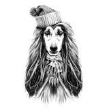 Vecteur de croquis de lévrier afghan de race de plein-visage de tête de chien Photo libre de droits