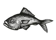 Vecteur de croquis de poissons de mérou illustration stock