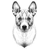 Vecteur de croquis de tête de Basenji de race de chien Illustration Stock