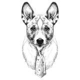 Vecteur de croquis de tête de Basenji de race de chien Illustration Libre de Droits
