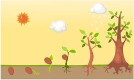 Vecteur de cycle de vie d'arbre illustration de vecteur