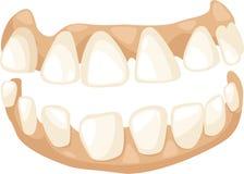 Vecteur de dents d'anatomie Photos stock