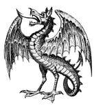 Vecteur de dragon Images stock