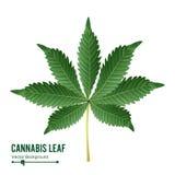 Vecteur de feuille de cannabis Cannabis vert de cannabis sativa ou feuille indica de cannabis d'isolement sur le fond blanc Plant Photos libres de droits