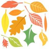 Vecteur de feuilles d'automne Image stock