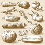 Vecteur de légumes, de fruits et de plantes Image stock