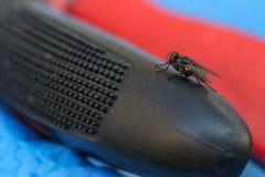 Vecteur de maladies de Muscidae de Domestica de Musca Images libres de droits