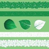 Vecteur de menthe et de menthol illustration libre de droits