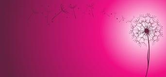 Vecteur de pissenlit à l'arrière-plan rose illustration stock