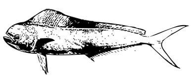 Vecteur de poissons de Dorado de vache à dauphin Images stock