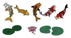 Vecteur de poissons de Koi réglé sur le fond blanc Photos libres de droits