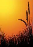 Vecteur de silhouette de Rye Images stock