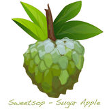 Vecteur de Sugar Apple Photo stock