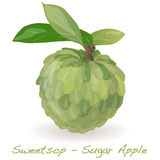 Vecteur de Sugar Apple Photographie stock