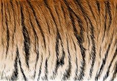 Vecteur de texture de fond de modèle de rayure de fourrure de tigre Photographie stock libre de droits