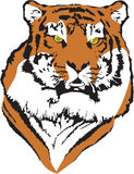 Vecteur de tigre Photo stock