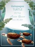 Vecteur de tortues de Galapagos Carte de mer d'été avec les tortues mignonnes illustration libre de droits