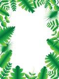 Vecteur et illustration verts 02 de cadre de feuille Images stock