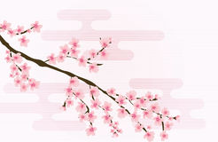 Vecteur floral abstrait de Sakura Flower Japanese Natural Background illustration stock