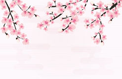 Vecteur floral abstrait de Sakura Flower Japanese Natural Background illustration de vecteur
