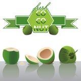 Vecteur frais de noix de coco illustration de vecteur
