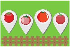 Vecteur frais de tomate Image libre de droits