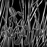 Vecteur Image stylisée de graphique de fleur d'iris Illustration avec Texture élégante sans fin Calibre pour le textile de concep illustration de vecteur