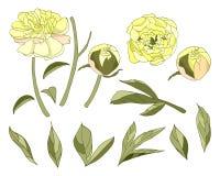 Vecteur jaune d'ensemble d'éléments de fleur de pivoine illustration de vecteur