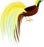 Vecteur Lesser Bird de mineur de paradis ou de Paradisaea Oiseau de la Papouasie-Nouvelle-Guinée Images libres de droits