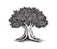 Vecteur Logo Design Illustration de dessin de chêne Photo stock