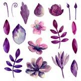 Vecteur pourpre de fleurs d'aquarelle Photo stock