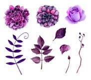 Vecteur pourpre de fleurs d'aquarelle Image libre de droits