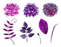 Vecteur pourpre de fleurs d'aquarelle Images libres de droits