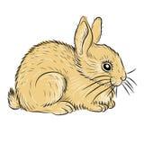 Vecteur réaliste de jeune lapin Photo libre de droits