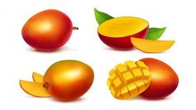 Vecteur réaliste entier et découpé en tranches de mangue illustration stock