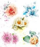 Vecteur réglé de belle aquarelle de fleurs Collections florales bleues de lis, de gerber et de roses illustration stock