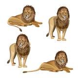 Vecteur réglé de lion illustration de vecteur