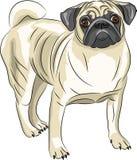 Vecteur Race de chien de roquet Images libres de droits